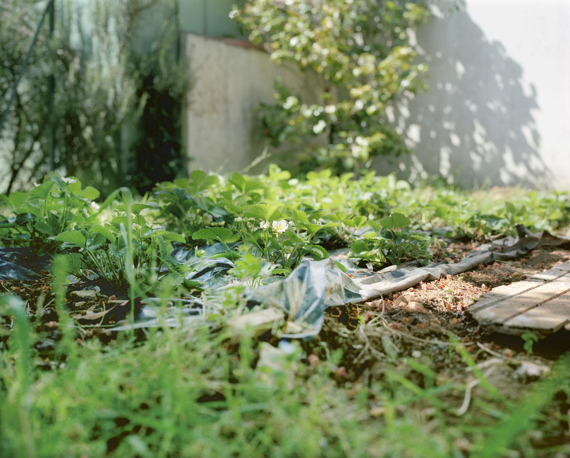 essayanlydie-jardin
